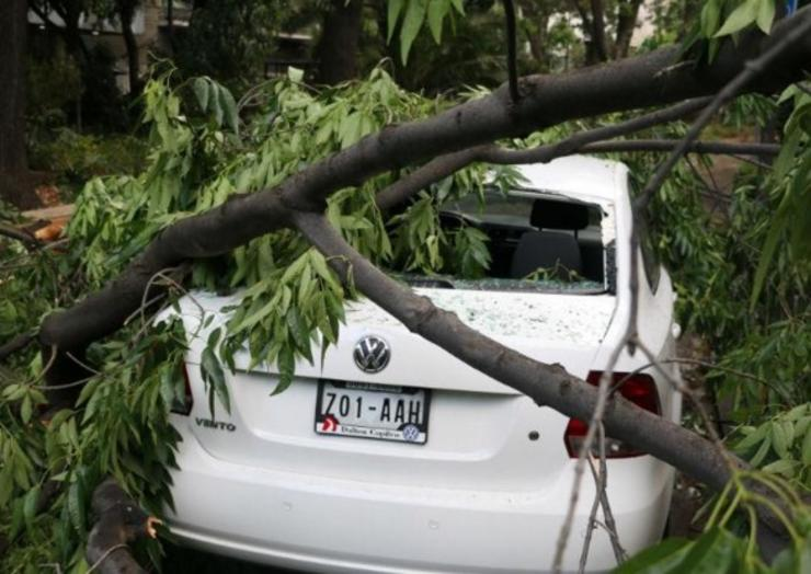 Seguro de coche Daños de árboles